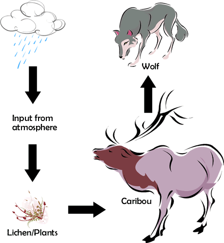 Terrestrial Food Chain