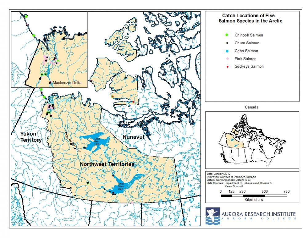Arctic salmon species location map