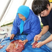 Brandon Zoe cutting meat with Elder at Tundra Science and Culture Camp. Summer 2013.