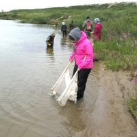 Susan learning how to use a beach seine fish net